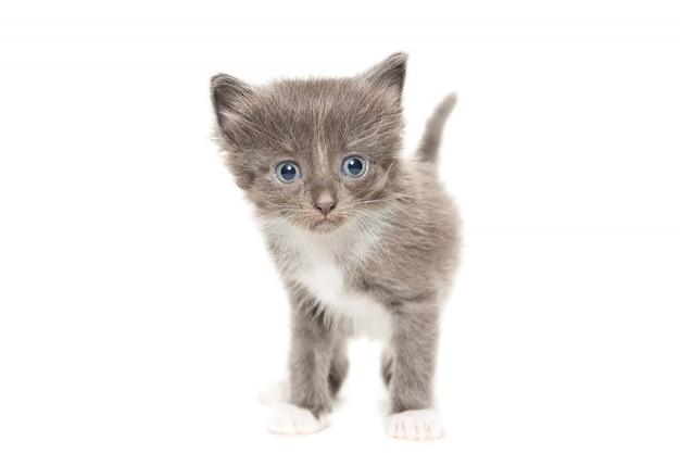 Gatito sobre un fondo blanco