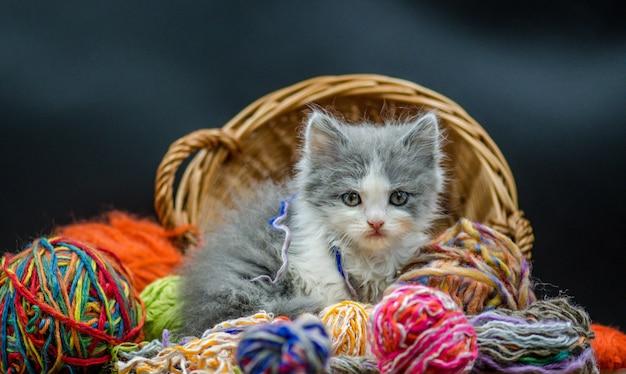 Gatito con tejidos en una cesta.