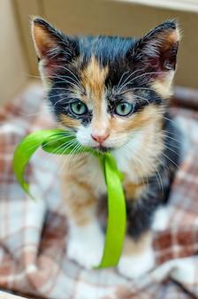 Gatito tricolor con una cinta verde en una caja de cartón afuera