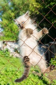 Gatito en la valla