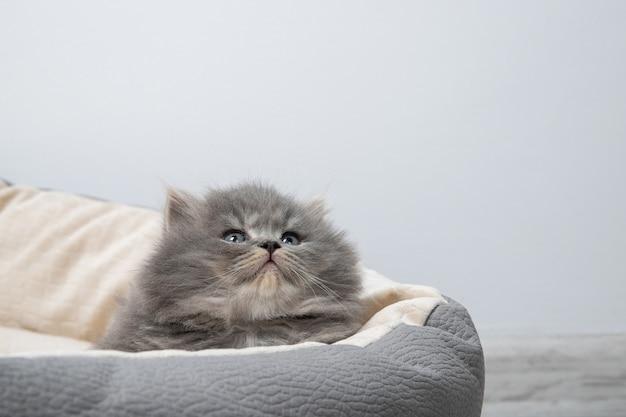 El gatito yace en la cama para gatos.