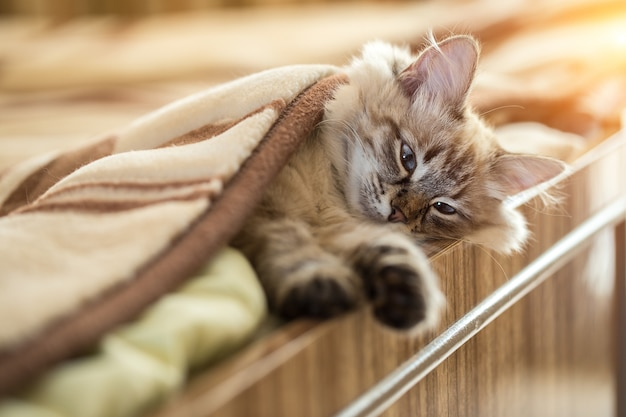 El gatito yace en la cama de su casa.