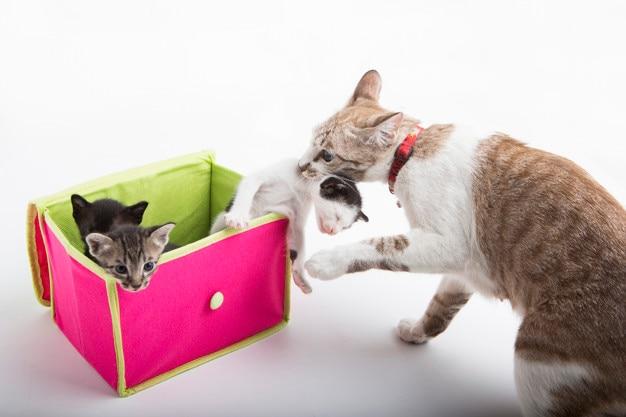 Puro Gato | Fotos y Vectores gratis
