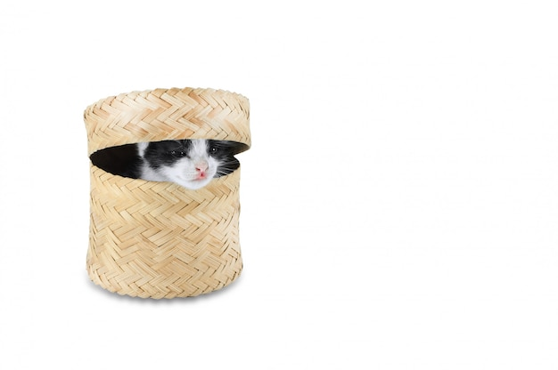Gatitos lindo bebé gato con cesta aislado sobre fondo blanco.