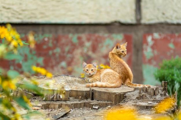 Gatitos salvajes de jengibre descansan en un jardín de árboles