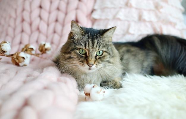 Gato acostado en la cama manta a cuadros gigantes piel dormitorio invierno vibes cosenos relájese