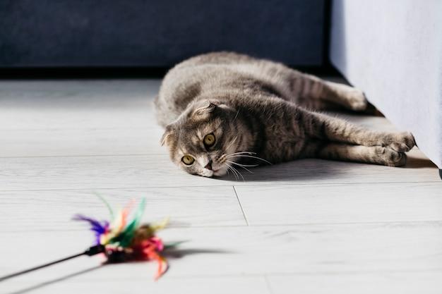 Gato acostado con juguete en el piso