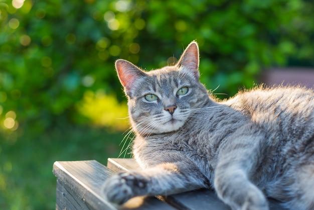 Gato acostado de lado en un banco a contraluz