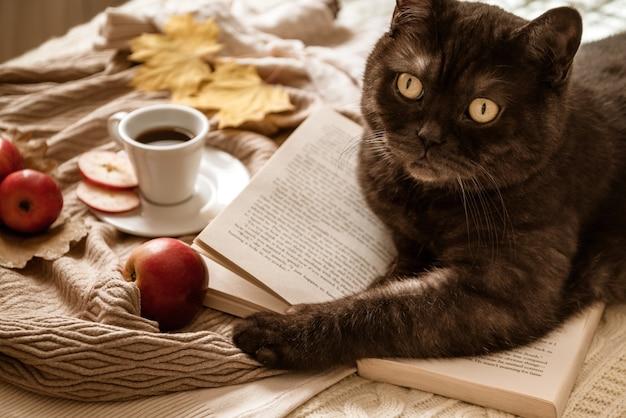Gato acostado sobre libro abierto rodeado de manzanas rojas dispersas, hojas amarillas y taza de café