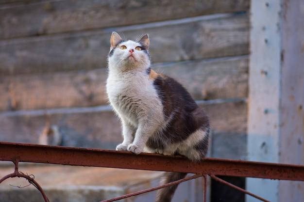 Gato adulto de la aldea en granja.