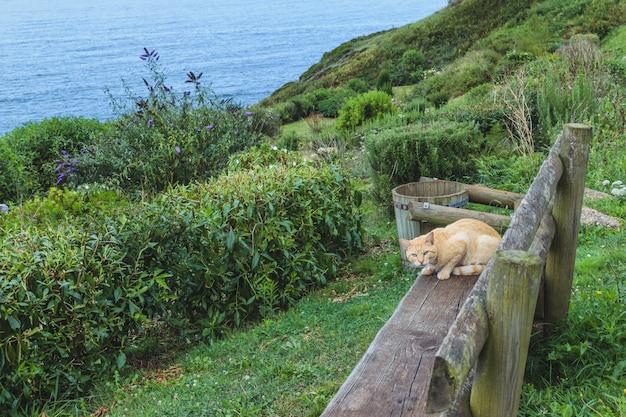 Gato amarillo rubio en un banco y fuera del paisaje trillado
