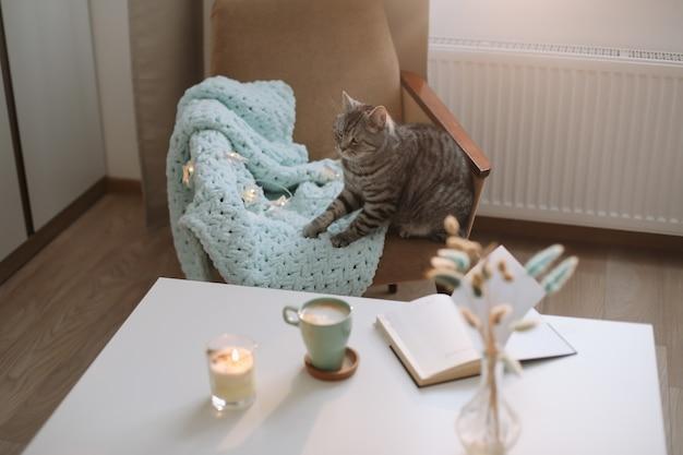 Gato atigrado gris recto escocés lindo divertido en casa.