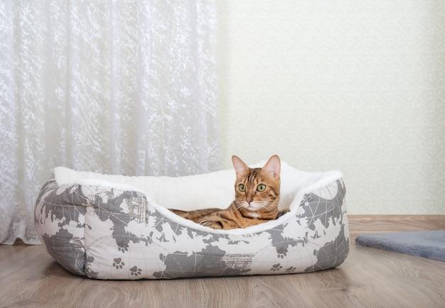 Gato de bengala en una cama de gato mullida en la habitación