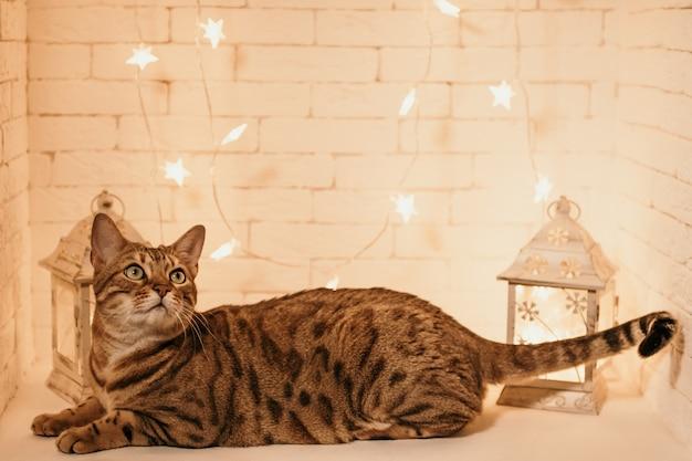 Gato de bengala con decoración navideña