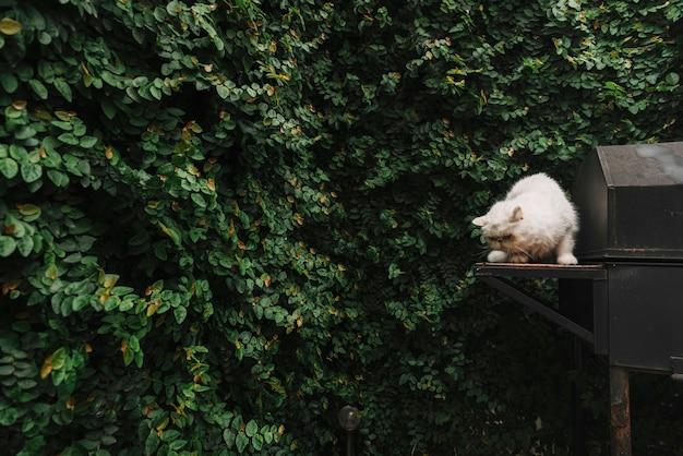 Gato blanco adorable en la naturaleza