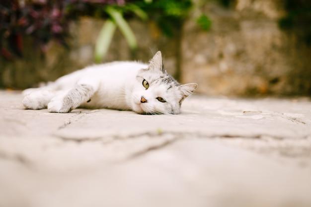 Gato blanco y gris descansa sobre el asfalto en el patio.