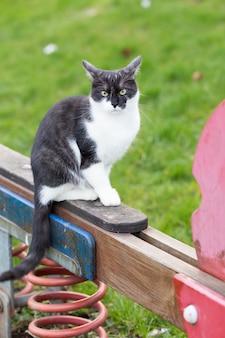 Un gato blanco y negro sentado en un balancín en un patio de recreo