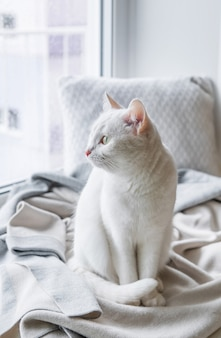 Gato blanco sentado en el alféizar de la ventana