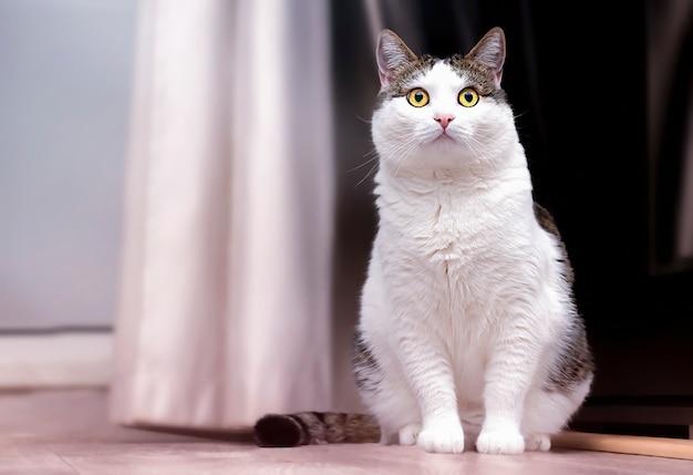 Un gato blanco está sentado en la habitación.