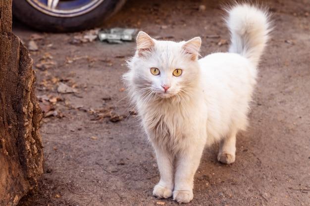 Gato blanco sucio en la calle