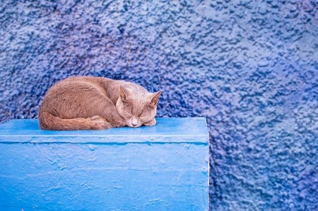 Gato británico dormido al aire libre, aislado en azul.