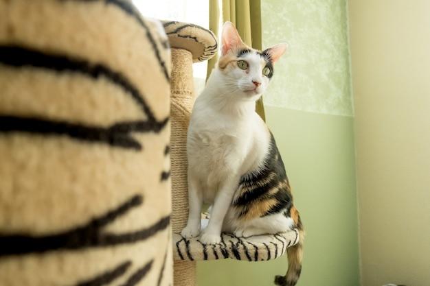 Gato buscando comida, está buscando algo detrás de ellos con atención.