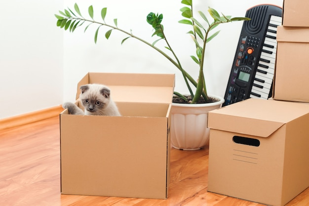 Gato en una caja en casa nueva. artículos domésticos empaquetados para mudarse a una nueva casa.