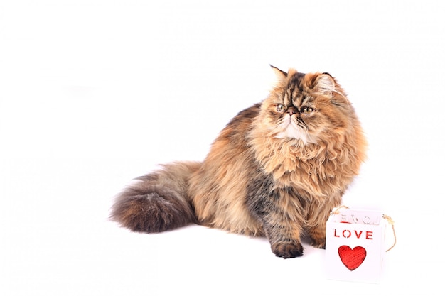Gato con la caja de regalo del corazón aislada en el fondo blanco. gato persa tricolor