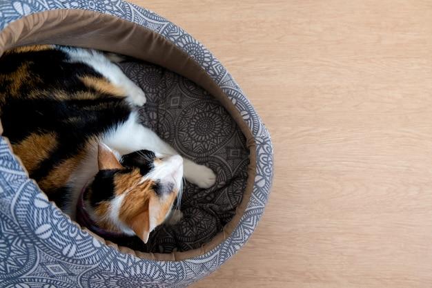 Un gato calicó está acostado en un cojín.