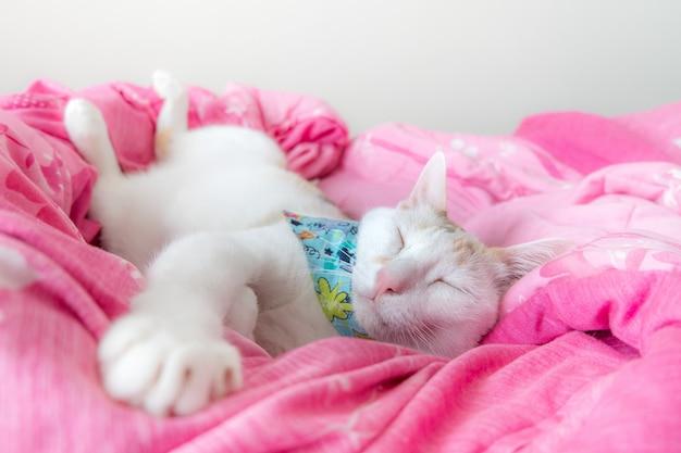 El gato calicó duerme cómodamente sobre el edredón rosa.