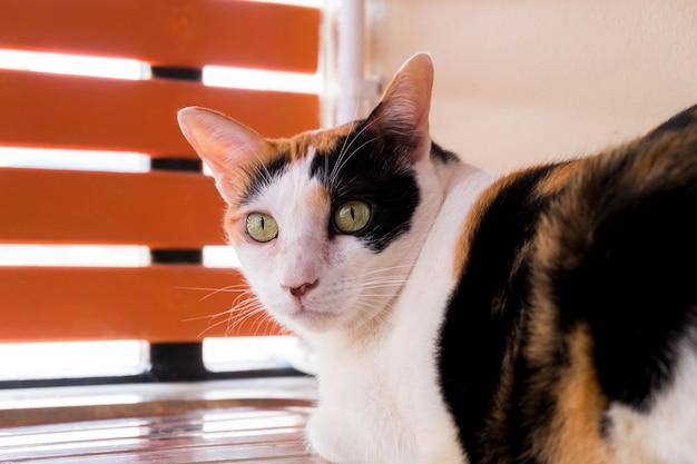 Un gato calico que mira fijamente algo y ella está sentada en el fregadero.