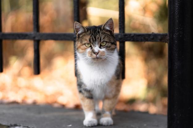 Gato en la calle mirando hacia un lado, ojos verdes, mascotas al aire libre, personas sin hogar. concepto de animales domésticos