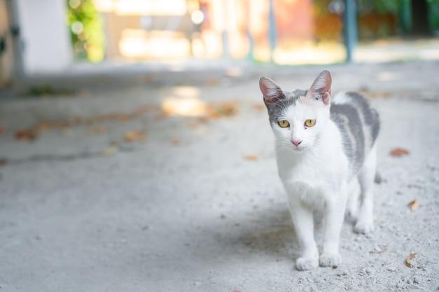 Gato callejero caminando por la calle