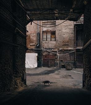 Gato callejero caminando entre los edificios de ladrillo en un callejón sin salida