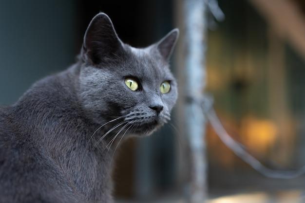 Gato callejero negro en la calle