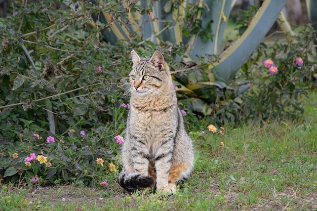 Gato callejero rayado gris se sienta en el césped contra arbustos en flor.