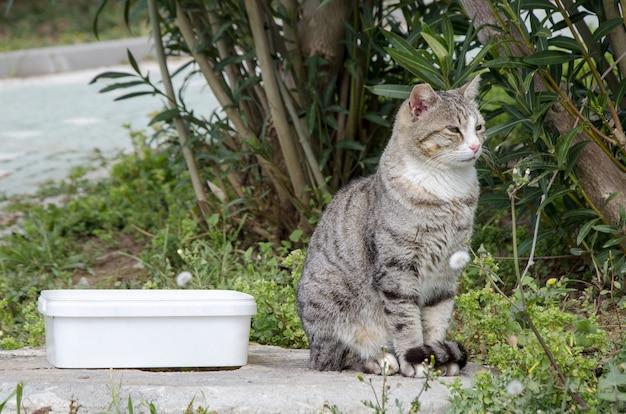 Gato callejero rayado gris se sienta junto al recipiente de comida contra arbustos verdes.