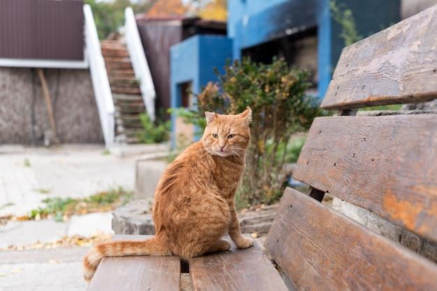 Gato callejero rojo sentado en un banco de madera en un parque de la ciudad. concepto de adopción y protección animal.