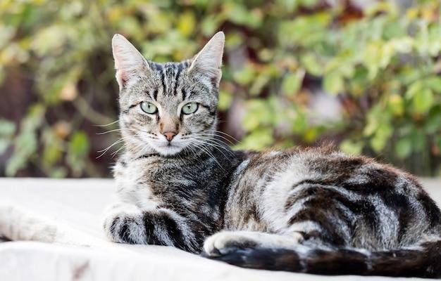 Gato callejero salvaje