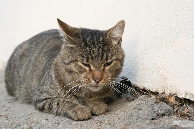 Gato callejero tirado en el suelo
