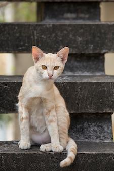 Gato callejero.