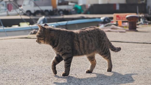 Un gato caminando por la calle cerca del puerto