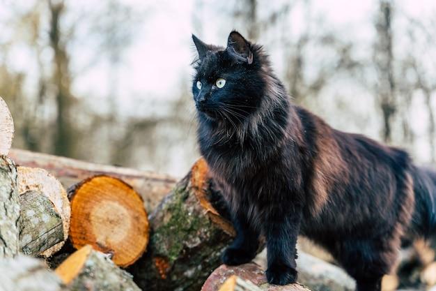 Gato casero negro trepando sobre una pila de troncos, cierre con espacio de copia en el lado izquierdo