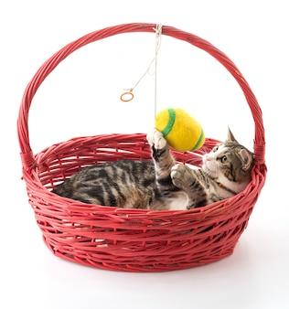 Gato en cesta roja