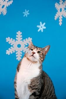 Gato contra fondo azul