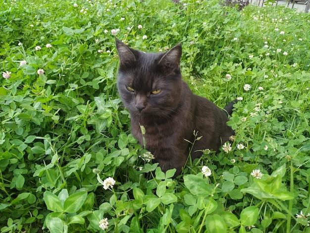 Gato con una correa sentado en la hierba.