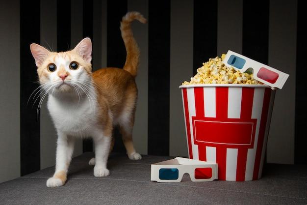 Gato con cubo de palomitas de maíz