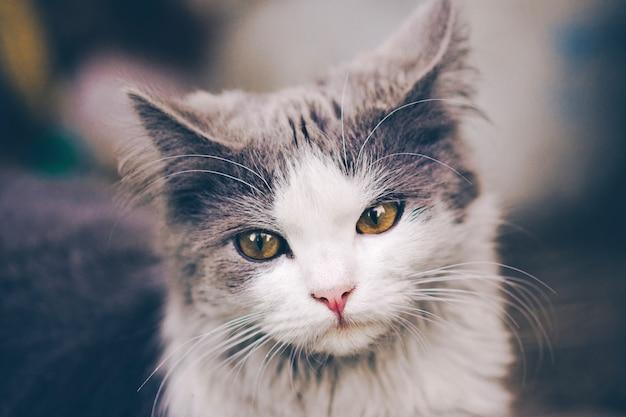 Gato curioso en pueblo