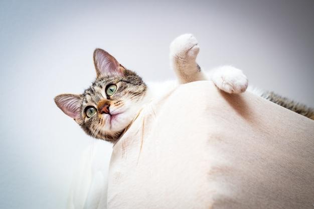 Gato curioso sobre el colchón