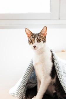 Gato debajo de la manta junto a la ventana